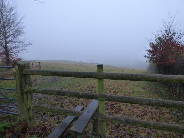 fog 005