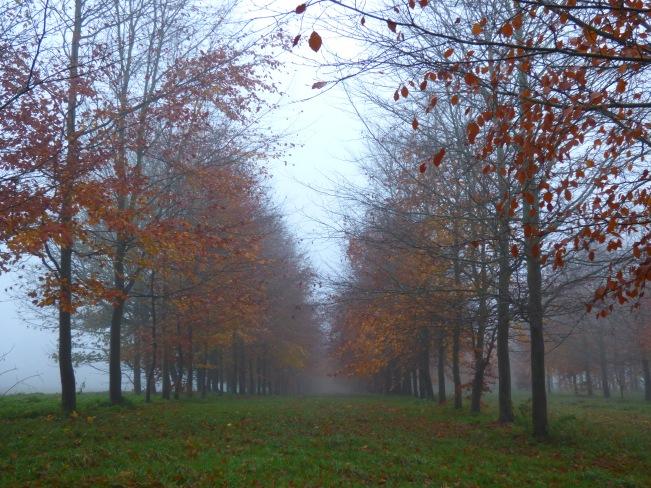 fog 011