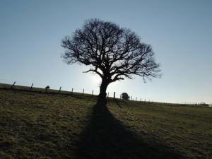 Edge of new tree