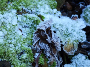 frosted leaves and moss