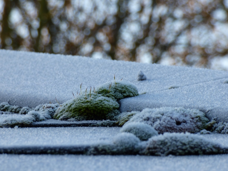 frost 045