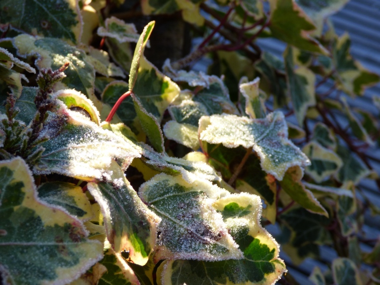 frost 053