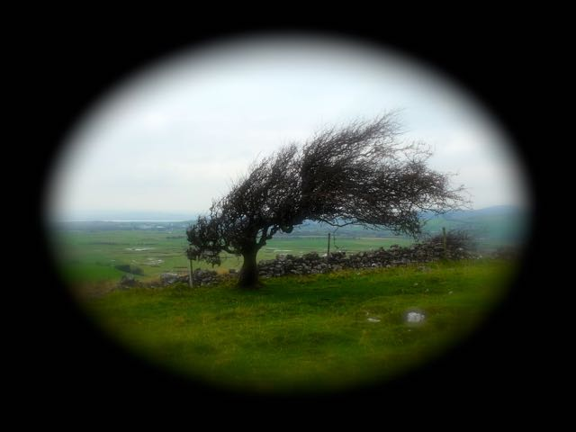 Humphrey Head vignette Lone Tree ace