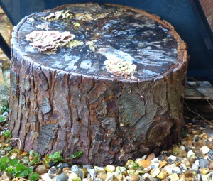 wood with fungus