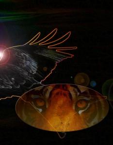 Hawk orange outline+tigereyeV2AA