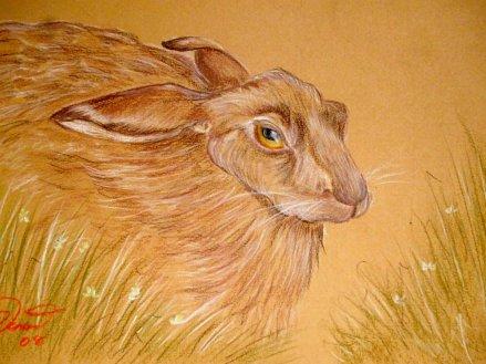 hare 001