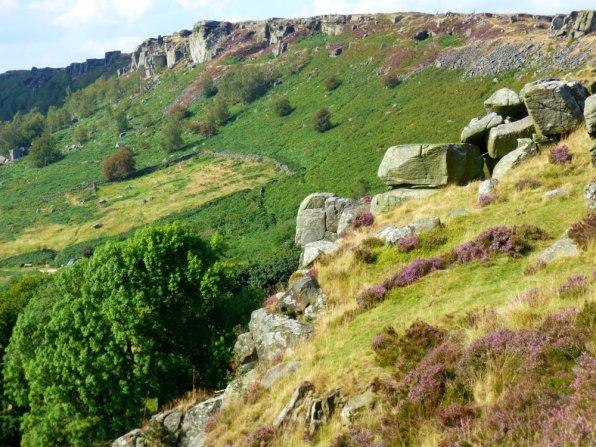 derbyshire heather
