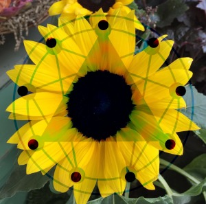 barbs-sunflower-for-luca-aaa