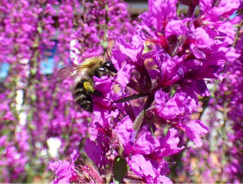 bees 020