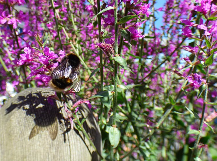 bees 024