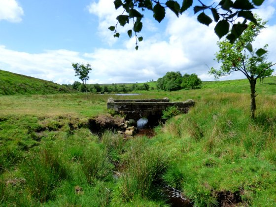 snake-adder-barbrook-merin-stone-beeley-derbyshire-ani-056