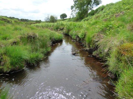 snake-adder-barbrook-merin-stone-beeley-derbyshire-ani-121