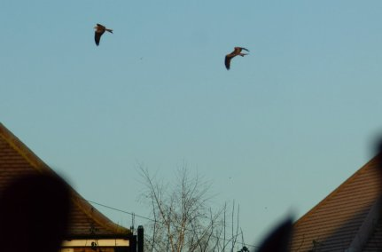 birds-018