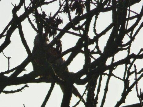 birds-048