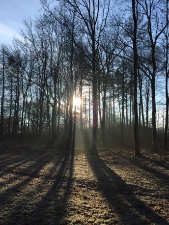 light-path-in-trees-caravan-sizergh