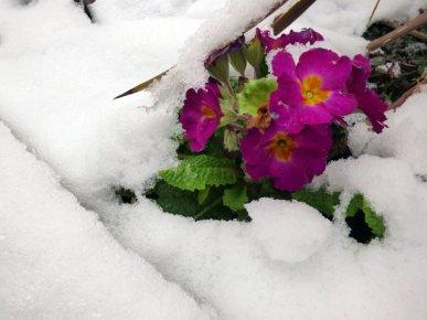 flowers (12)