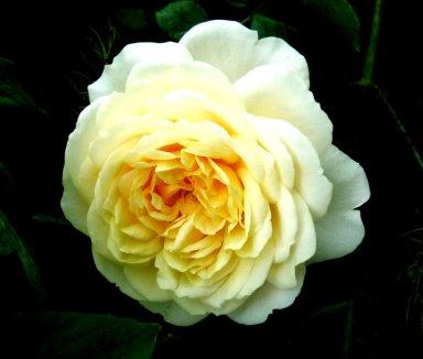 flowers (9)